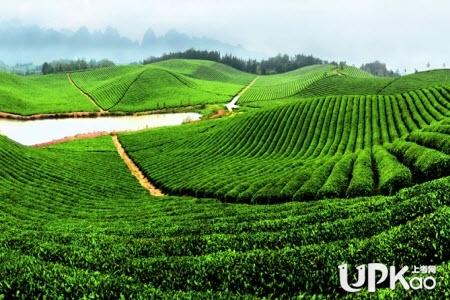 茶叶生产加工技术专业的就业前景怎么样